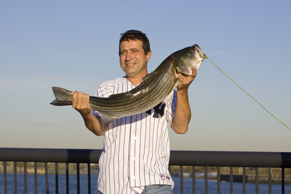 Carteret man catched 36 inch striper in Arthur Kill