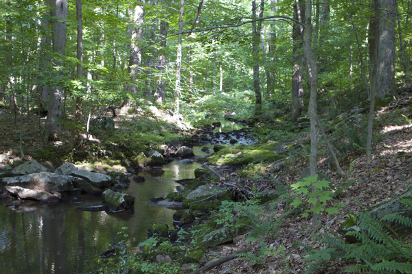 Alexauken Creek, Ringoes, NJ - healthy Category One stream buffer